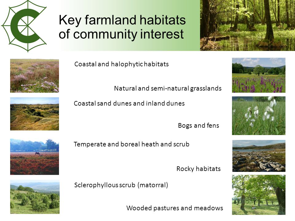 Key farmland habitats of community interest Coastal and halophytic habitats Coastal sand dunes and inland dunes Temperate and boreal heath and scrub Sclerophyllous scrub (matorral) Natural and semi-natural grasslands Bogs and fens Rocky habitats Wooded pastures and meadows