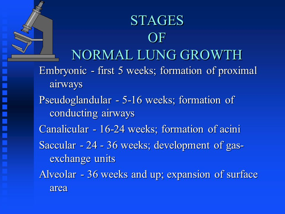 STAGES OF NORMAL LUNG GROWTH Embryonic - first 5 weeks; formation of proximal airways Pseudoglandular weeks; formation of conducting airways Canalicular weeks; formation of acini Saccular weeks; development of gas- exchange units Alveolar - 36 weeks and up; expansion of surface area