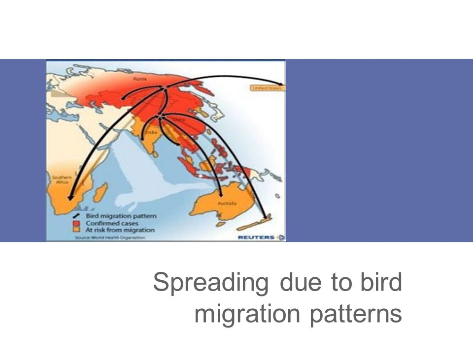 Spreading due to bird migration patterns