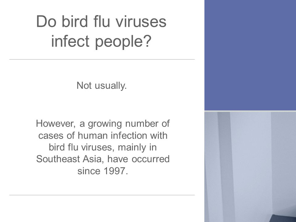 Do bird flu viruses infect people. Not usually.