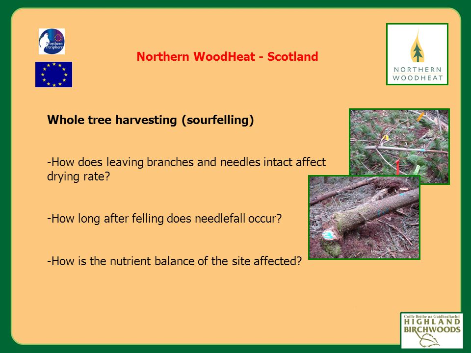 Whole tree harvesting (sourfelling) -How does leaving branches and needles intact affect drying rate.