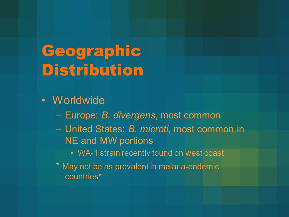 Geographic Distribution Worldwide –Europe: B. divergens, most common –United States: B.