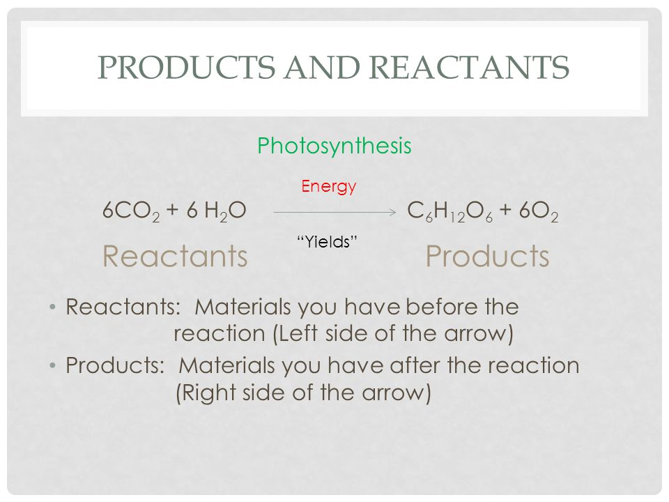 PRODUCTS AND REACTANTS Photosynthesis 6CO H 2 O C 6 H 12 O 6 + 6O 2 Reactants: Materials you have before the reaction (Left side of the arrow) Products: Materials you have after the reaction (Right side of the arrow) Energy ProductsReactants Yields