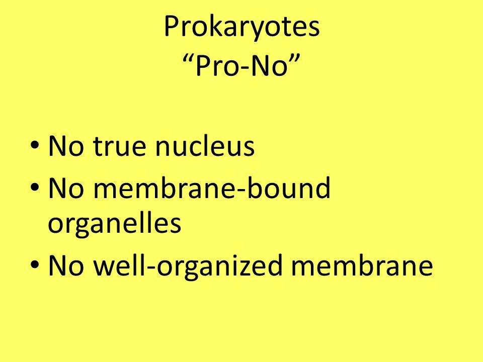 Prokaryotes Pro-No No true nucleus No membrane-bound organelles No well-organized membrane