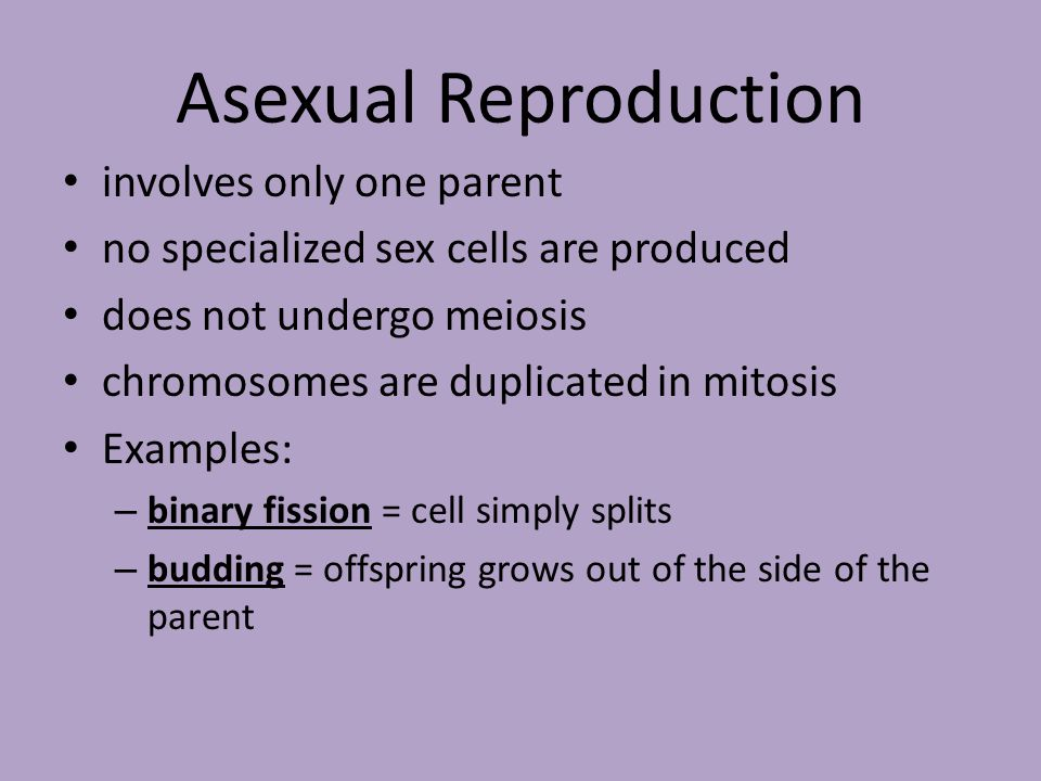 Asexual Reproduction involves only one parent no specialized sex cells are produced does not undergo meiosis chromosomes are duplicated in mitosis Examples: – binary fission = cell simply splits – budding = offspring grows out of the side of the parent