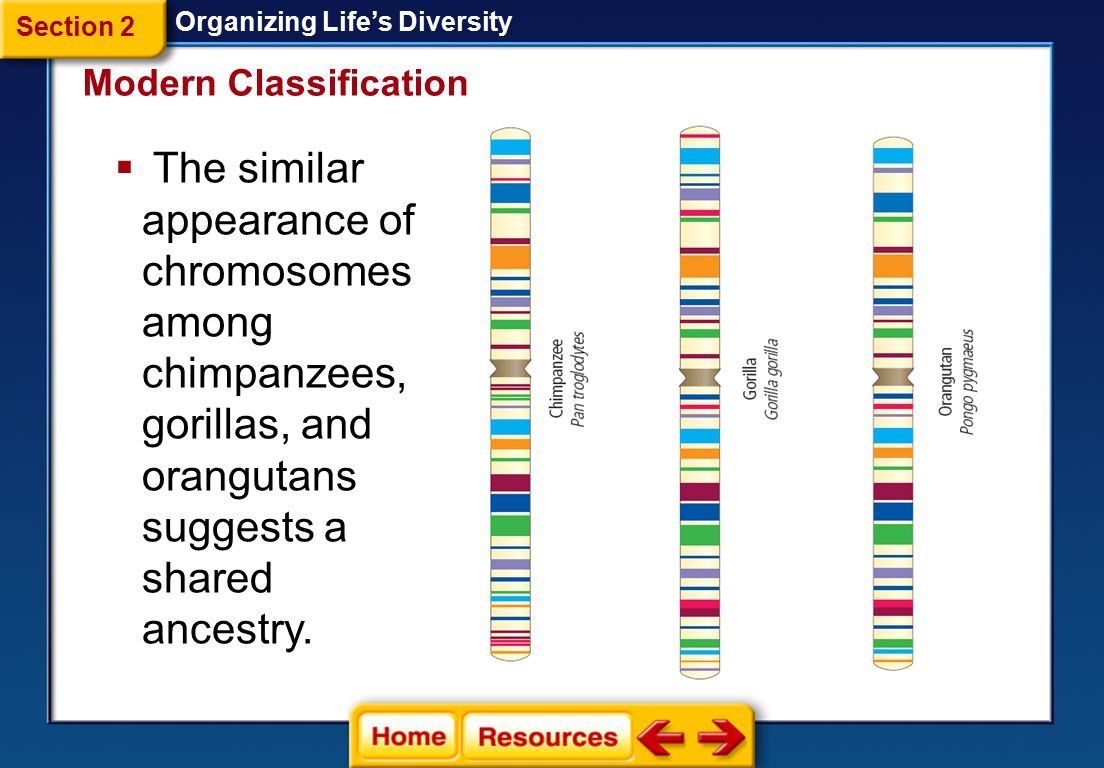 Biochemical Characters Organizing Life's Diversity  Scientists use biochemical characters, such as *, to help them determine evolutionary relationships among species.