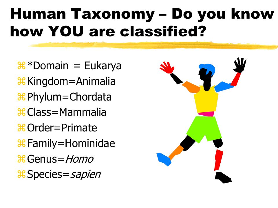 Modern Classification – which taxon is new. 1. *Domain – most general taxa 2.