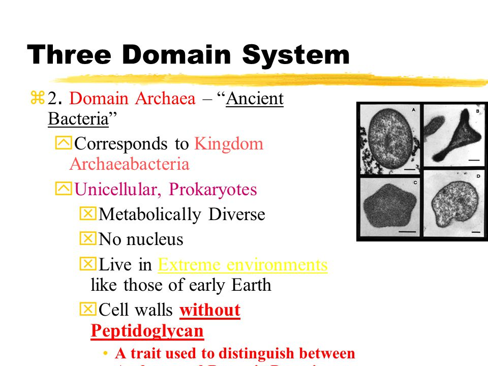 Three Domain System 1.