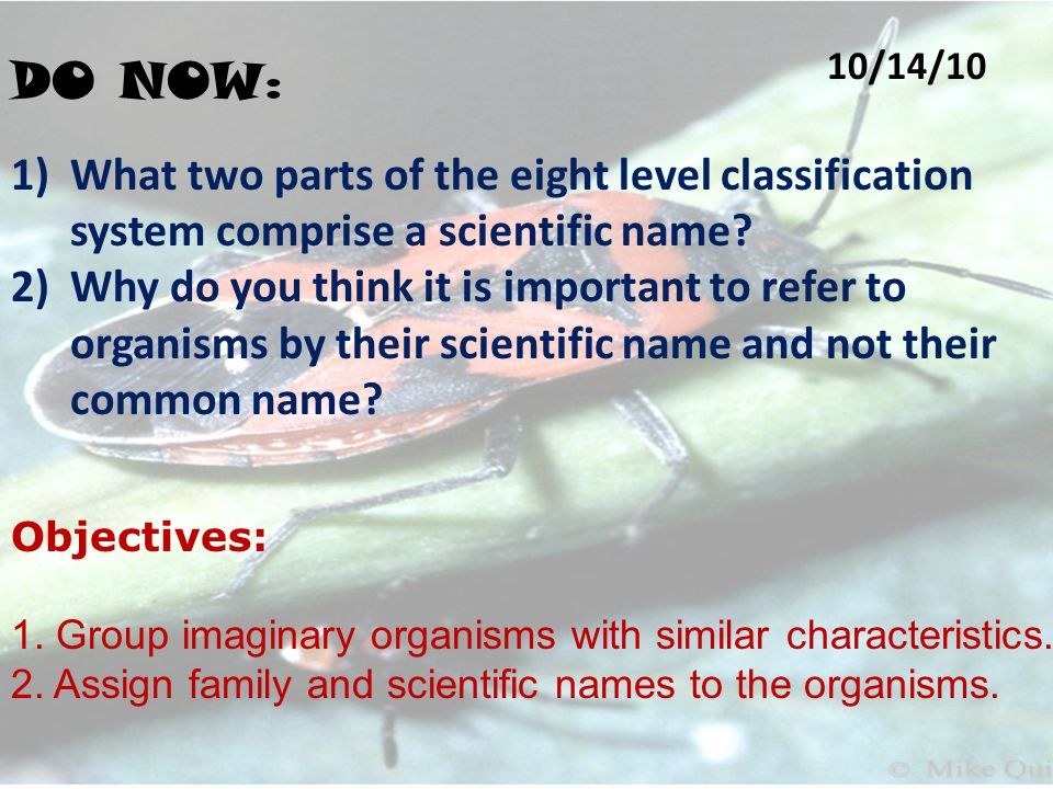 DO NOW : 10/14/10 1)What two parts of the eight level classification system comprise a scientific name.