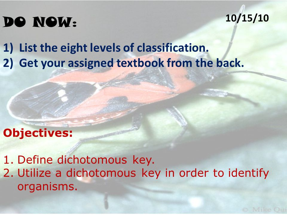 DO NOW : 10/15/10 1)List the eight levels of classification.