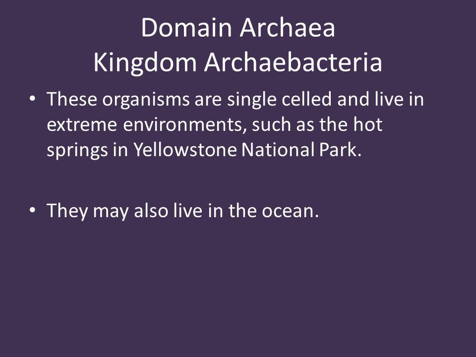 Domain Archaea Kingdom Archaebacteria These organisms are single celled and live in extreme environments, such as the hot springs in Yellowstone National Park.