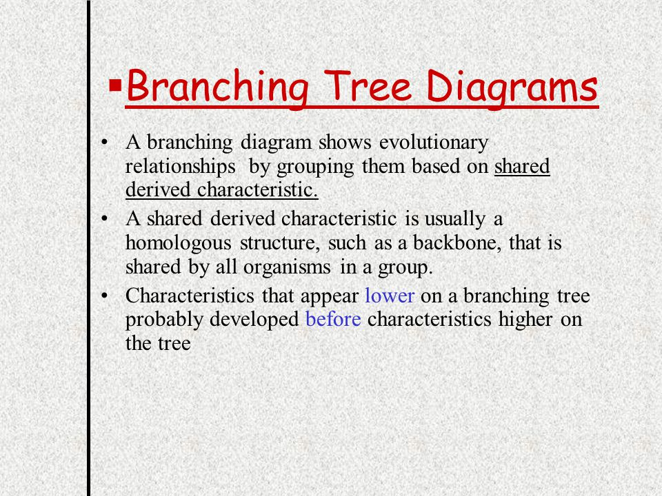 Ch 7 sections 4 5 p cclassification the process of 9 bbranching tree diagrams scientists draw branching tree diagrams to show the probable evolutionary relationships among organisms ccuart Choice Image