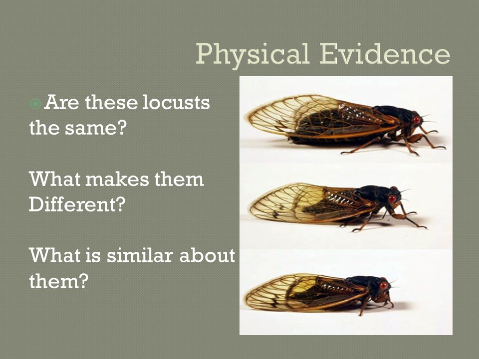 Physical Evidence  Are these locusts the same. What makes them Different.