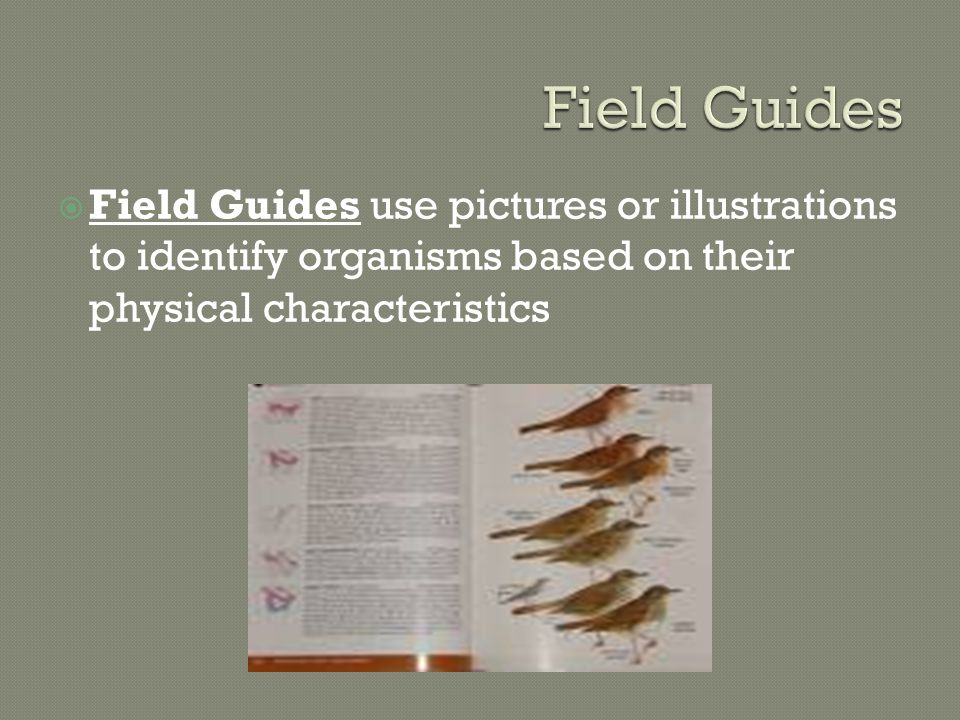  Field Guides use pictures or illustrations to identify organisms based on their physical characteristics