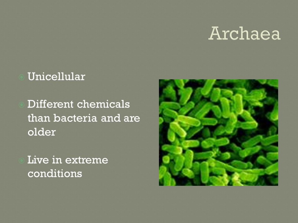 Archaea  Unicellular  Different chemicals than bacteria and are older  Live in extreme conditions