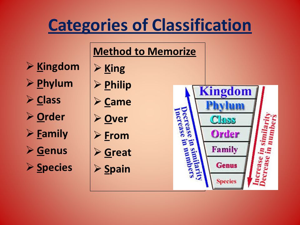 Categories of Classification Method to Memorize  King  Philip  Came  Over  From  Great  Spain  Kingdom  Phylum  Class  Order  Family  Genus  Species