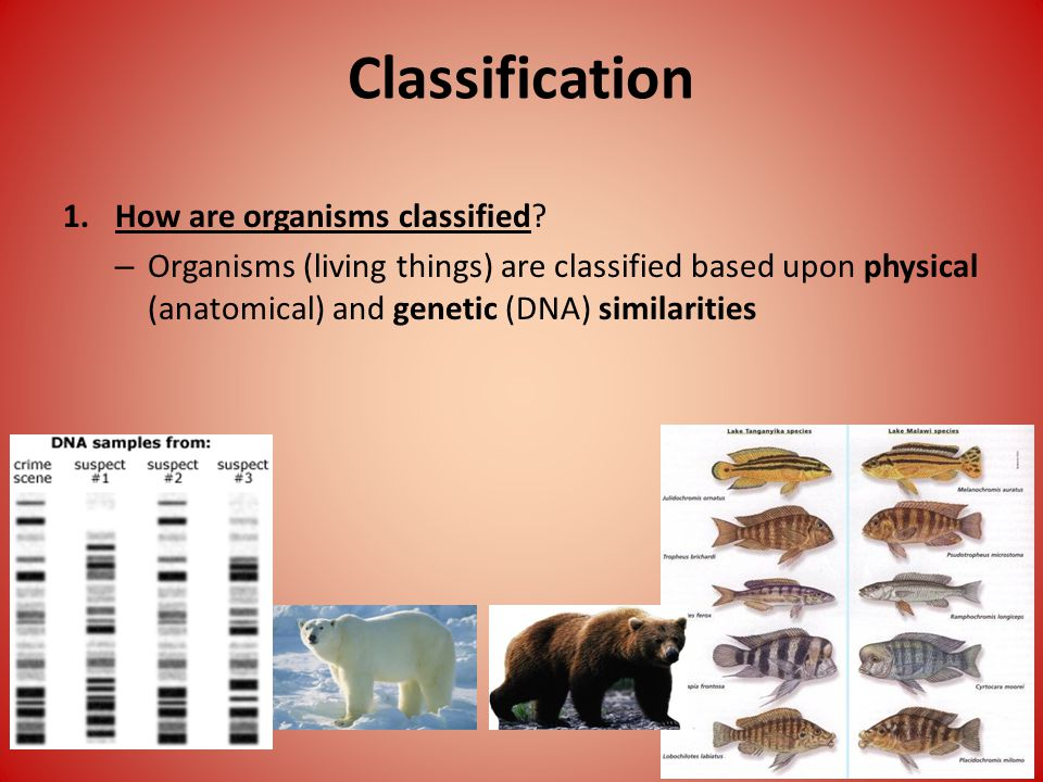 Classification 1.How are organisms classified.