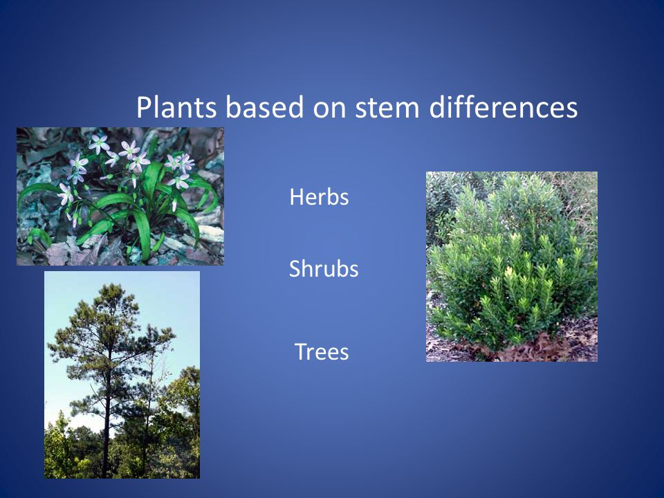 Plants based on stem differences Herbs Shrubs Trees