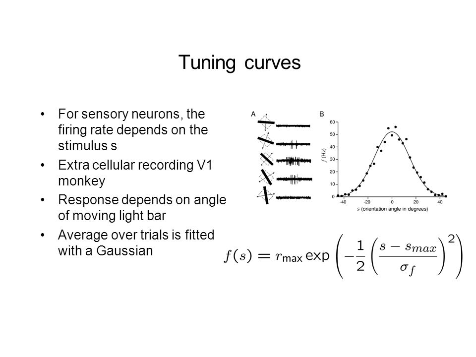 Tuning curves For sensory neurons, the firing rate depends on the stimulus s Extra cellular recording V1 monkey Response depends on angle of moving light bar Average over trials is fitted with a Gaussian