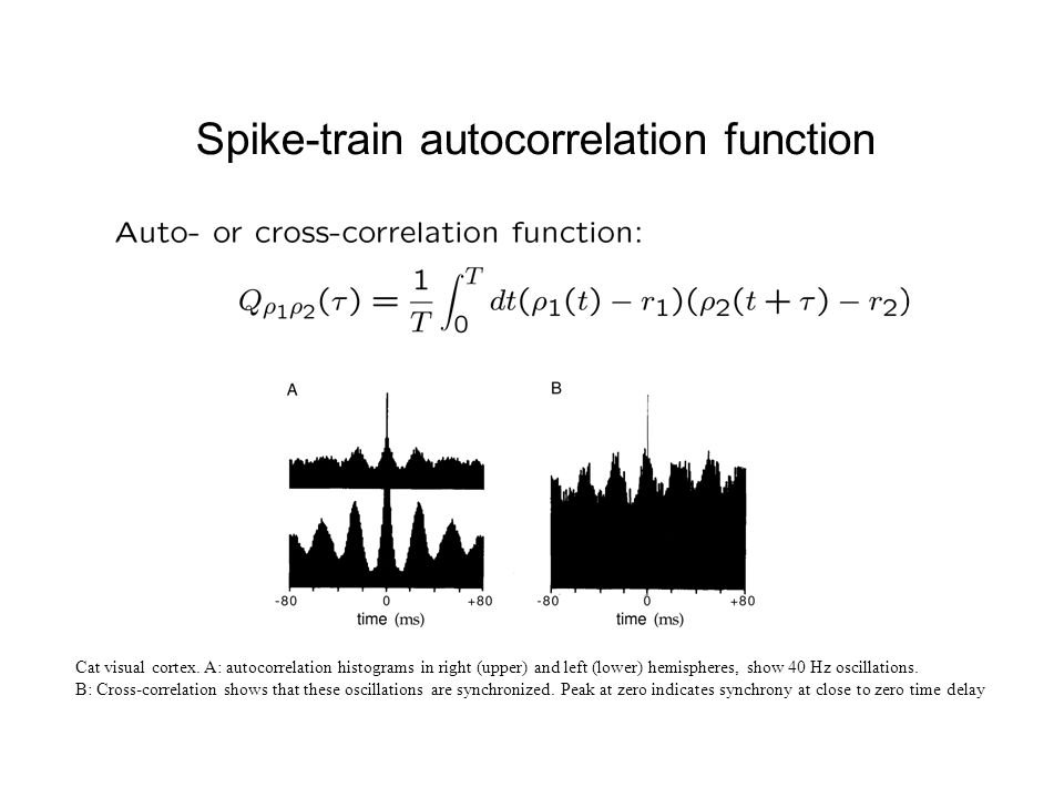 Spike-train autocorrelation function Cat visual cortex.