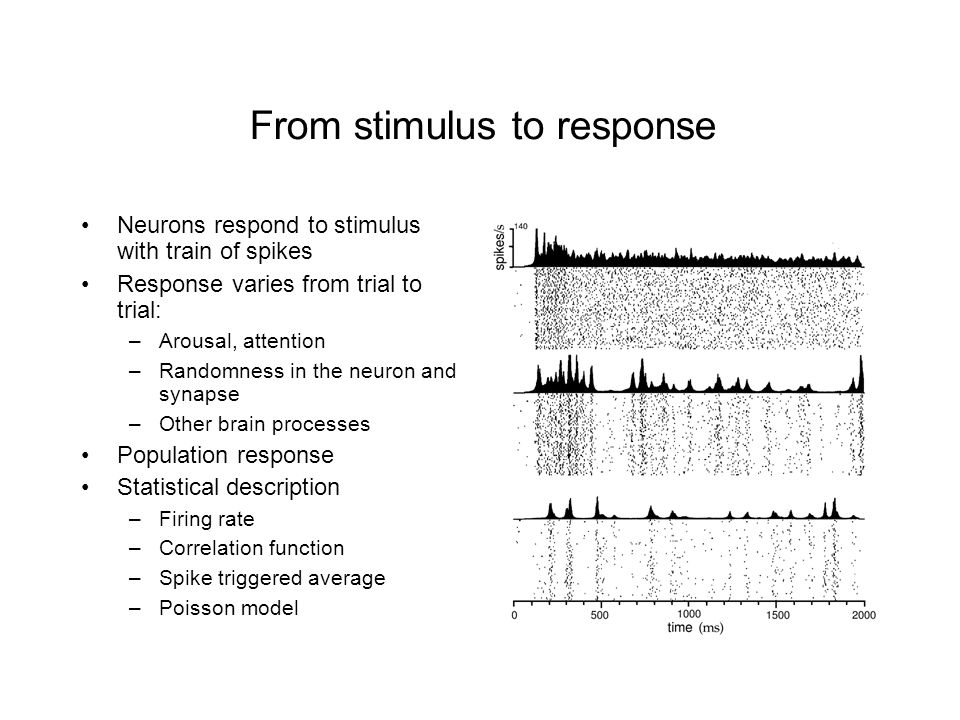 From stimulus to response Neurons respond to stimulus with train of spikes Response varies from trial to trial: –Arousal, attention –Randomness in the neuron and synapse –Other brain processes Population response Statistical description –Firing rate –Correlation function –Spike triggered average –Poisson model