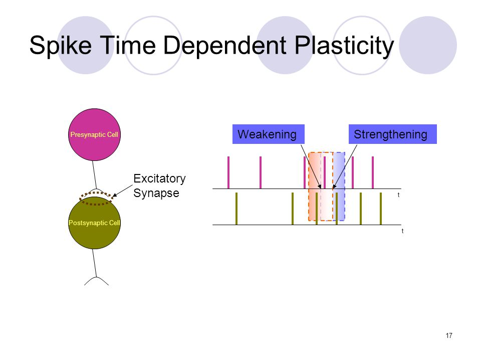 Spike Time Dependent Plasticity t t StrengtheningWeakening Presynaptic Cell Postsynaptic Cell Excitatory Synapse 17