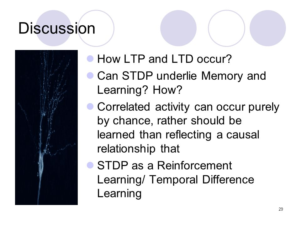 Discussion How LTP and LTD occur. Can STDP underlie Memory and Learning.