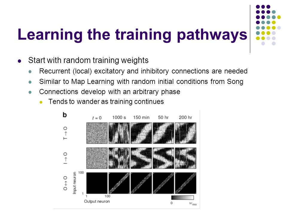 Learning the training pathways Start with random training weights Recurrent (local) excitatory and inhibitory connections are needed Similar to Map Learning with random initial conditions from Song Connections develop with an arbitrary phase Tends to wander as training continues