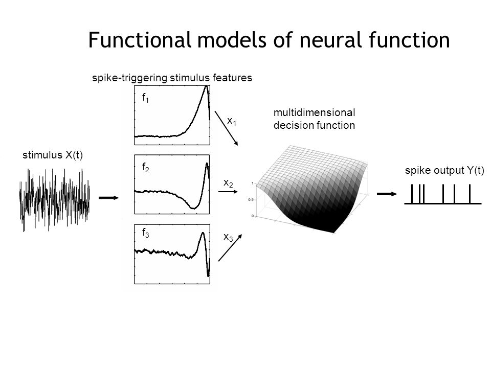 spike-triggering stimulus features stimulus X(t) multidimensional decision function spike output Y(t) x1x1 x2x2 x3x3 f1f1 f2f2 f3f3 Functional models of neural function