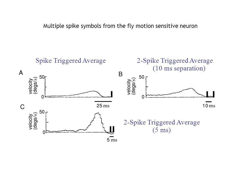 Spike Triggered Average 2-Spike Triggered Average (10 ms separation) 2-Spike Triggered Average (5 ms) Multiple spike symbols from the fly motion sensitive neuron