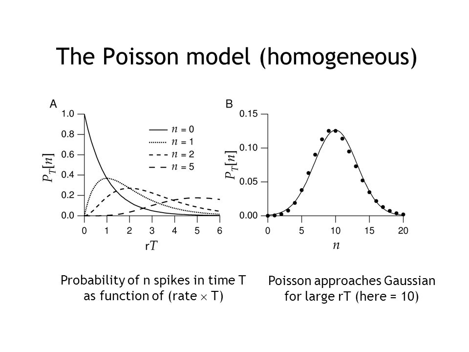 The Poisson model (homogeneous) Probability of n spikes in time T as function of (rate  T) Poisson approaches Gaussian for large rT (here = 10)