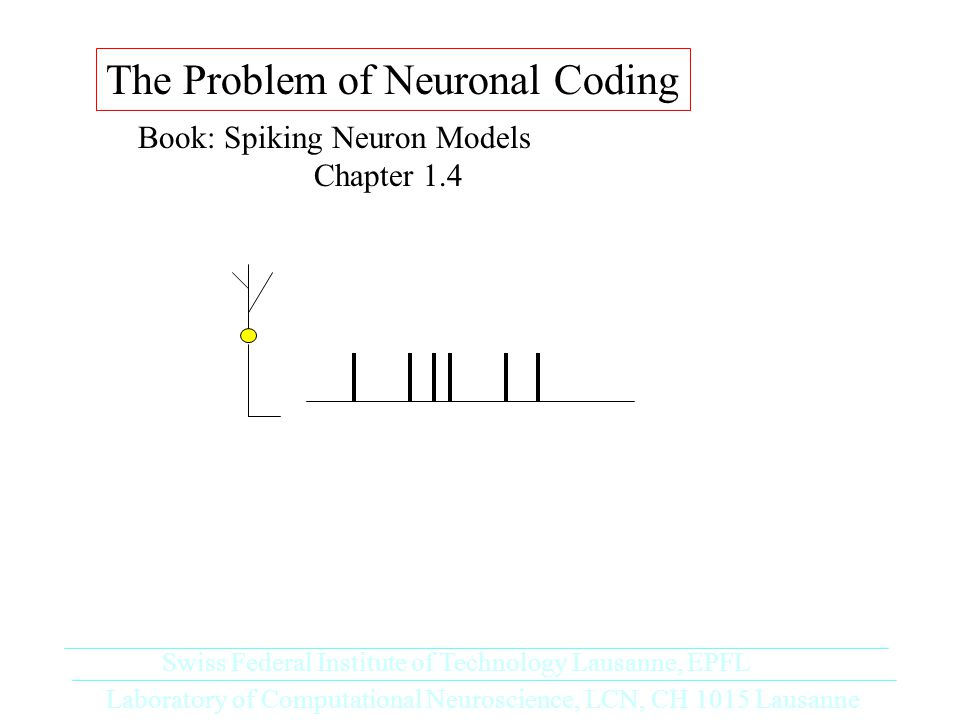 The Problem of Neuronal Coding Book: Spiking Neuron Models Chapter 1.4 Laboratory of Computational Neuroscience, LCN, CH 1015 Lausanne Swiss Federal Institute of Technology Lausanne, EPFL
