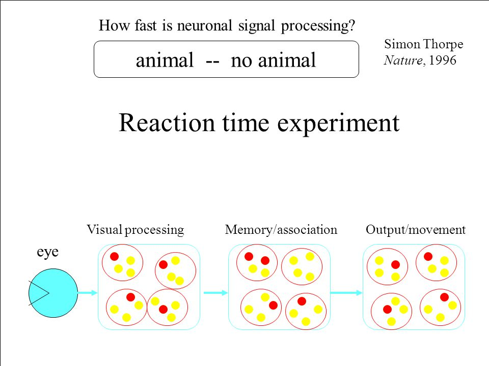 How fast is neuronal signal processing.