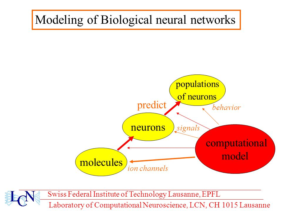 Laboratory of Computational Neuroscience, LCN, CH 1015 Lausanne populations of neurons computational model Swiss Federal Institute of Technology Lausanne, EPFL neurons molecules ion channels behavior signals Modeling of Biological neural networks predict