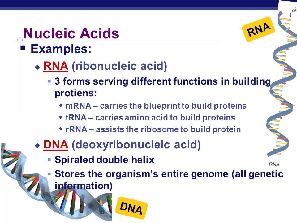 AP Biology A A A A T C G C G T G C T