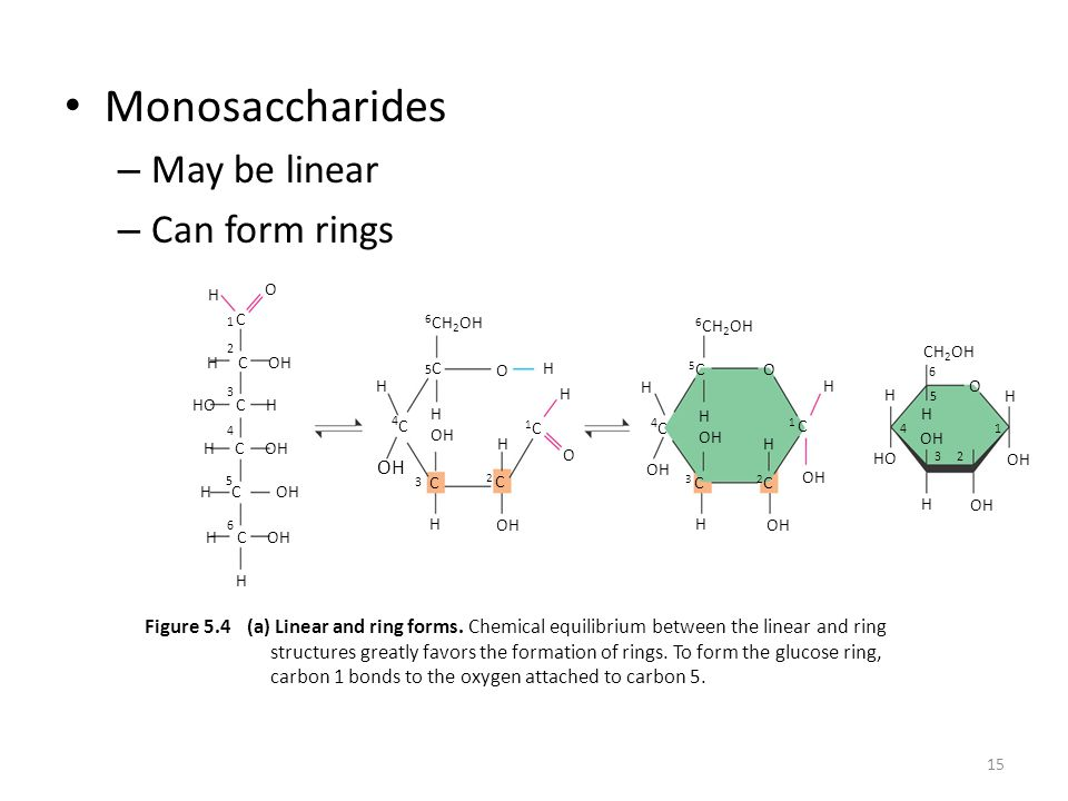 15 Monosaccharides – May be linear – Can form rings H H C OH HO C H H C OH H C O C H H OH 4C4C 6 CH 2 OH 5C5C H OH C H OH H 2 C 1C1C H O H OH 4C4C 5C5C 3 C H H OH OH H 2C2C 1 C OH H CH 2 OH H H OH HO H OH H (a) Linear and ring forms.