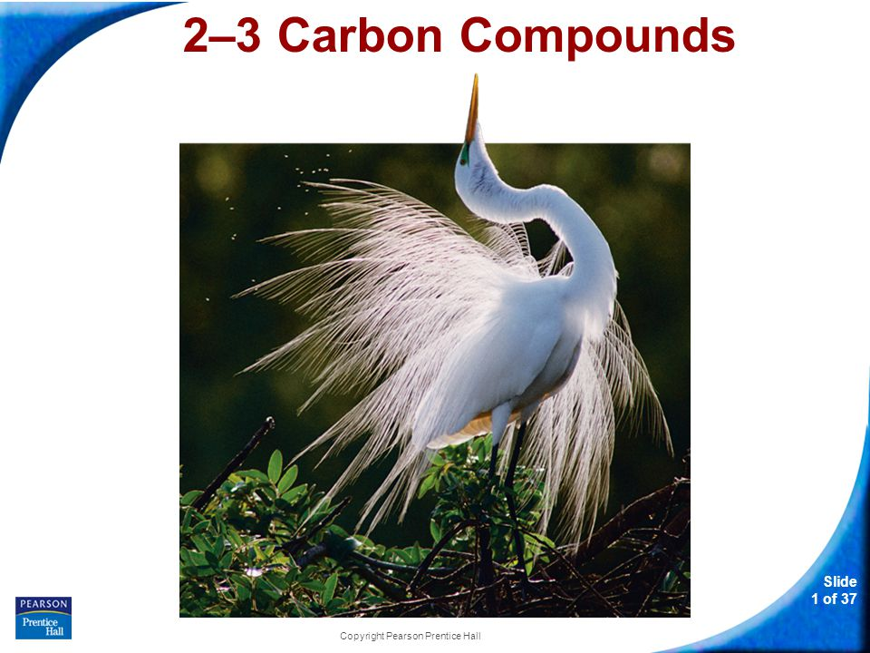 Slide 1 of 37 Copyright Pearson Prentice Hall 2–3 Carbon Compounds