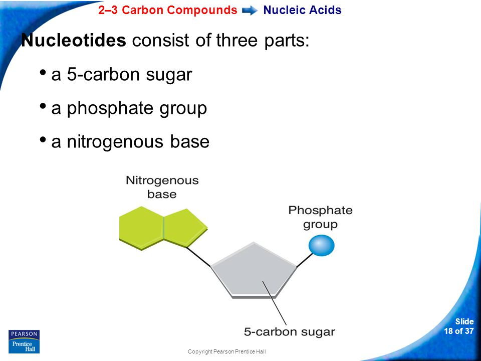 2–3 Carbon Compounds Slide 18 of 37 Copyright Pearson Prentice Hall Nucleic Acids Nucleotides consist of three parts: a 5-carbon sugar a phosphate group a nitrogenous base