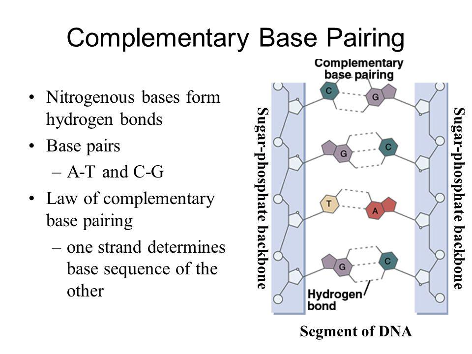 Molecular BiochemistryBioc.432 Lab 1: Introduction to nucleic ...