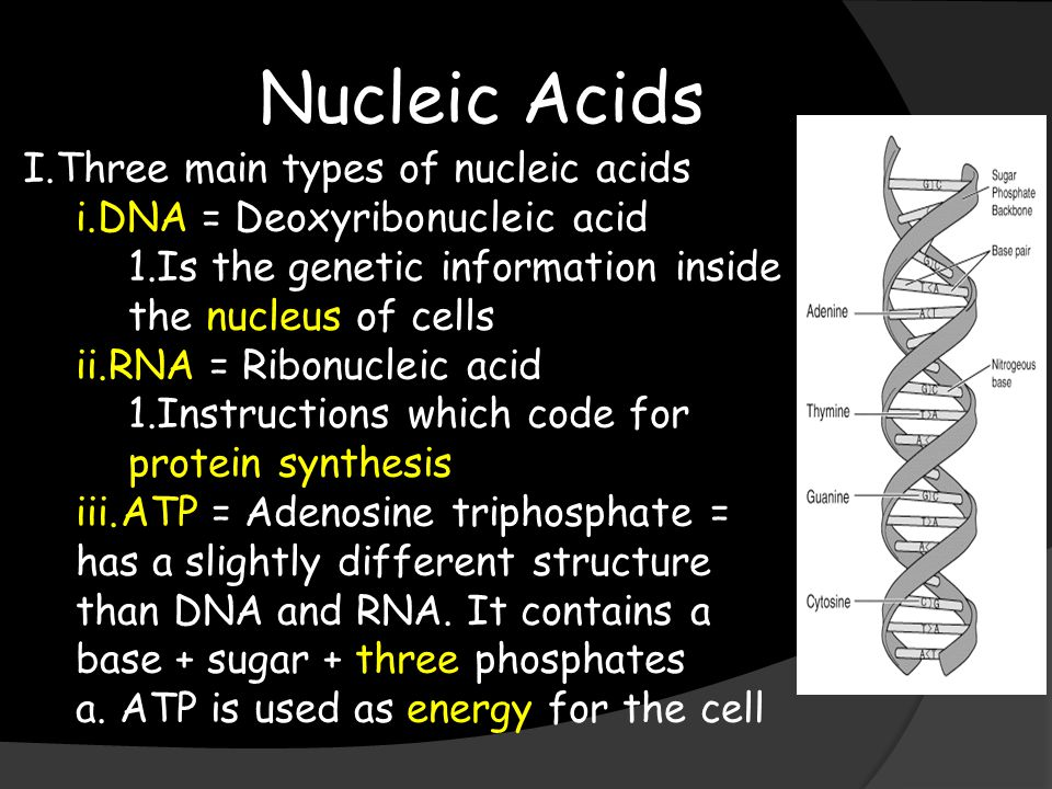 Nucleic Acids I.Three main types of nucleic acids i.DNA = Deoxyribonucleic acid 1.Is the genetic information inside the nucleus of cells ii.RNA = Ribonucleic acid 1.Instructions which code for protein synthesis iii.ATP = Adenosine triphosphate = has a slightly different structure than DNA and RNA.