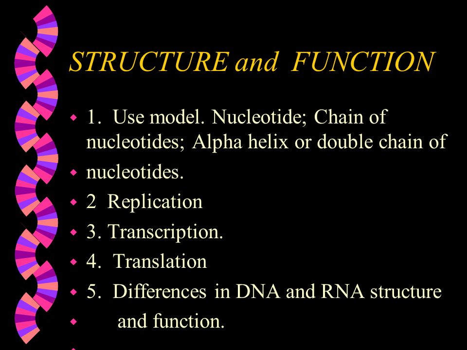 NUCLEIC ACIDS {DNA;RNA} w 1. What are they. w 2.