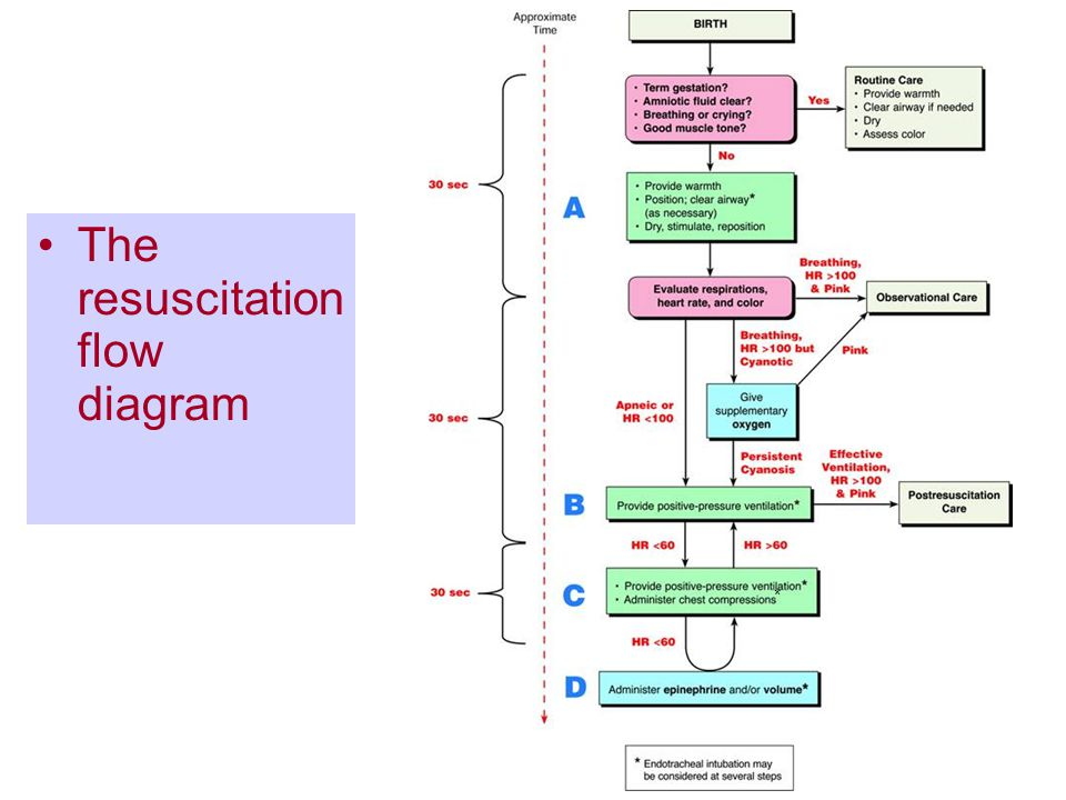 The resuscitation flow diagram *