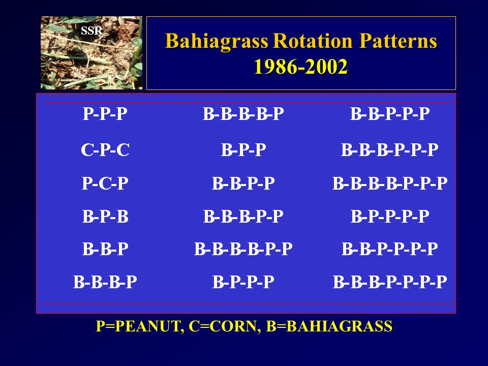 Bahiagrass Rotation Patterns P=PEANUT, C=CORN, B=BAHIAGRASS SSR