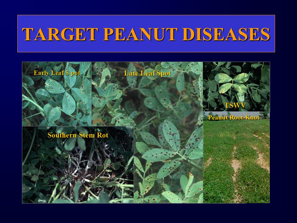 TARGET PEANUT DISEASES Early Leaf S pot Late Leaf Spot Southern Stem Rot TSWV Peanut Root-Knot