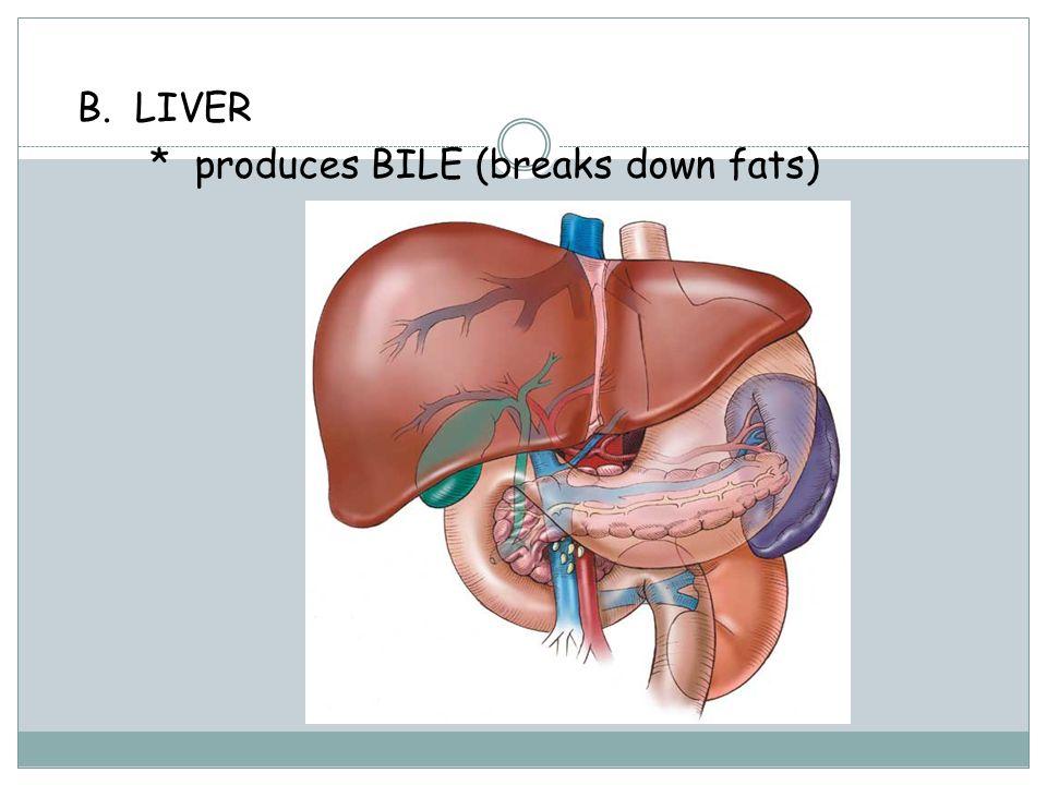 Green juice lose belly fat