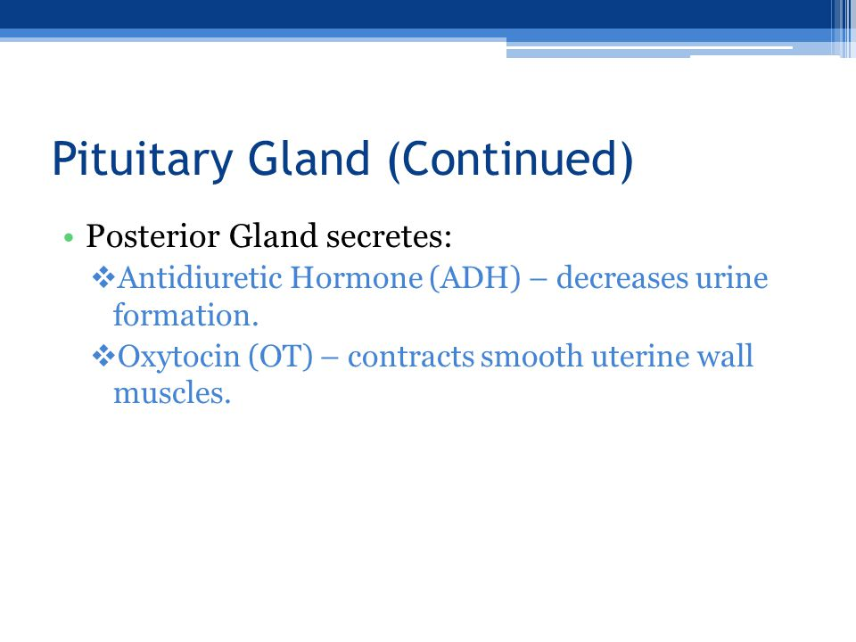 Pituitary Gland (Continued) Posterior Gland secretes:  Antidiuretic Hormone (ADH) – decreases urine formation.