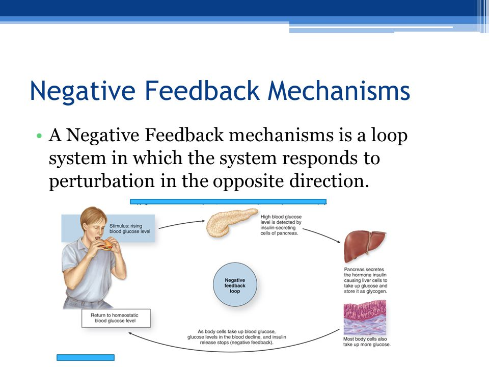 Negative Feedback Mechanisms A Negative Feedback mechanisms is a loop system in which the system responds to perturbation in the opposite direction.