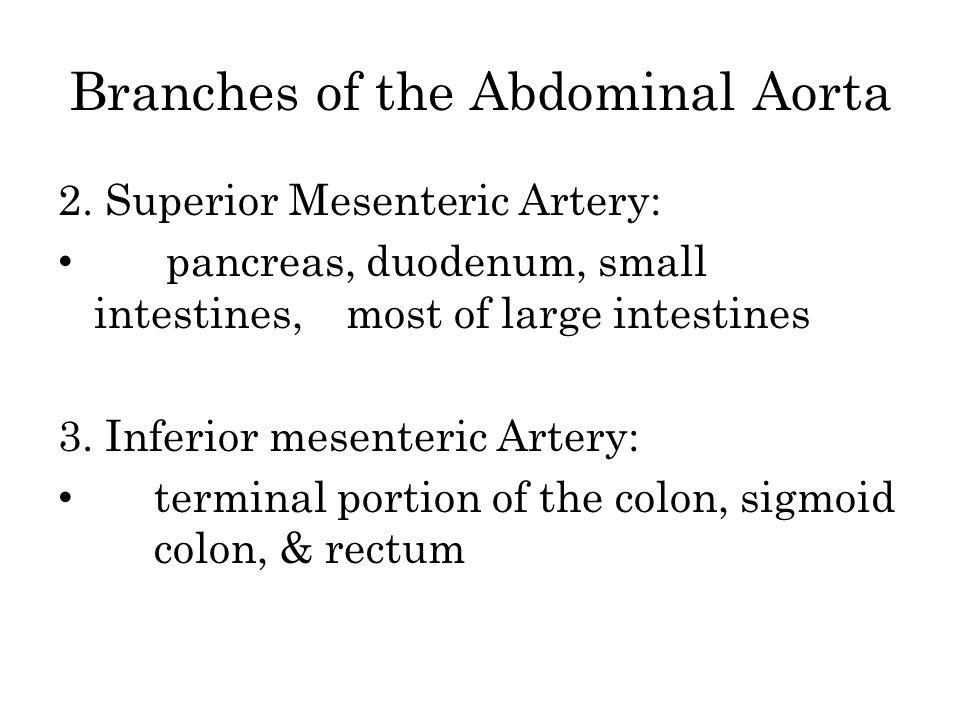 Branches of the Abdominal Aorta 2. Superior Mesenteric Artery: pancreas, duodenum, small intestines, most of large intestines 3. Inferior mesenteric A