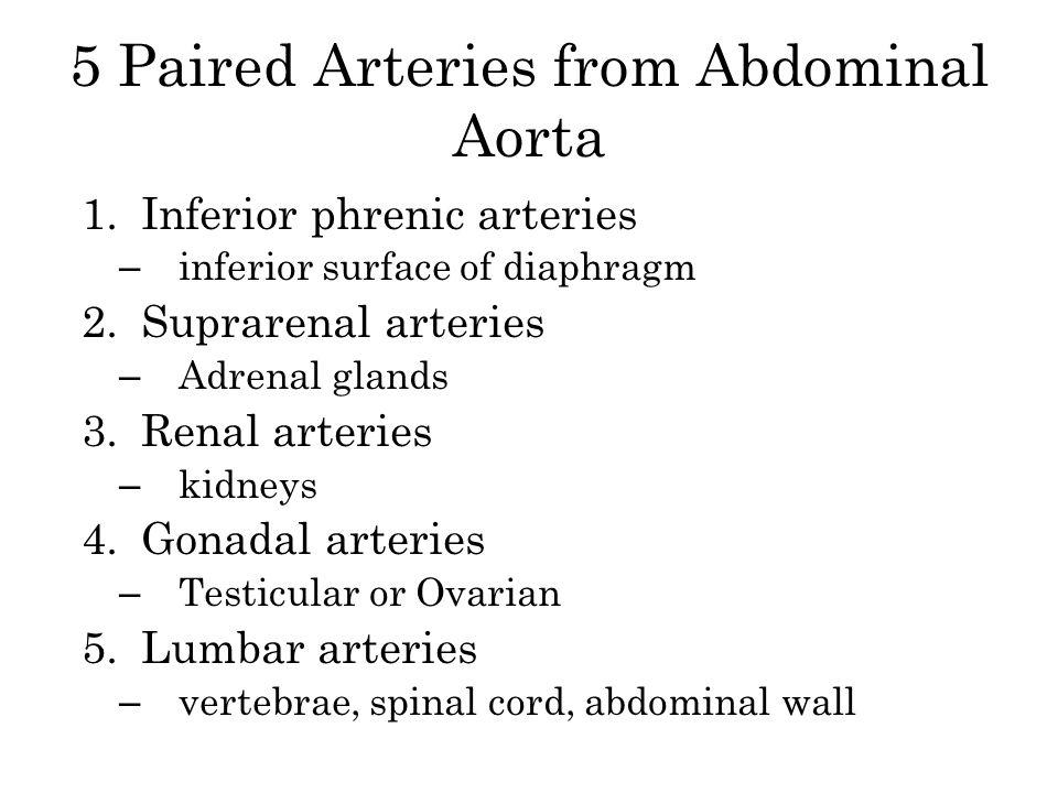 5 Paired Arteries from Abdominal Aorta 1.Inferior phrenic arteries – inferior surface of diaphragm 2.Suprarenal arteries – Adrenal glands 3.Renal arte
