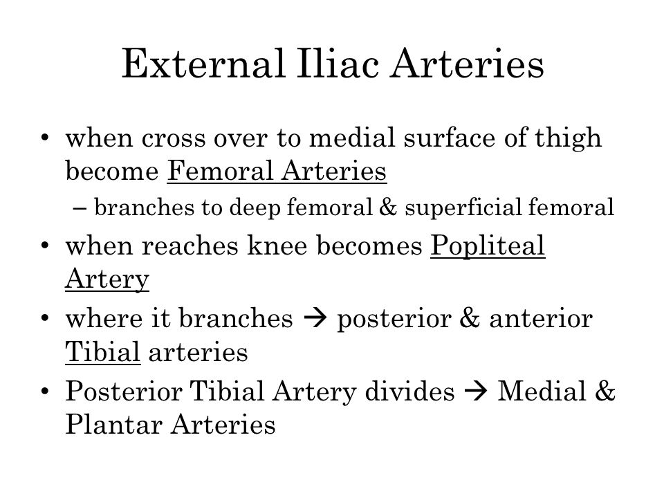 External Iliac Arteries when cross over to medial surface of thigh become Femoral Arteries – branches to deep femoral & superficial femoral when reach